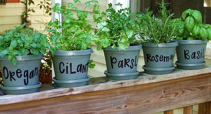 Mini-huerto-de-plantas-aromaticas-en-el-balcon